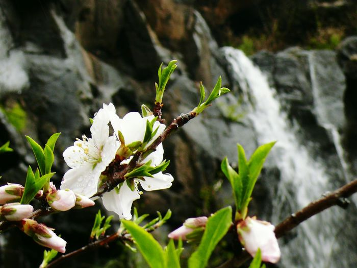 flowers and waterfalls... San Bartolomé De Tirajana Gran Canaria Almond Tree Waterfall Rainy Day Winter White Color Green Color Walking Around