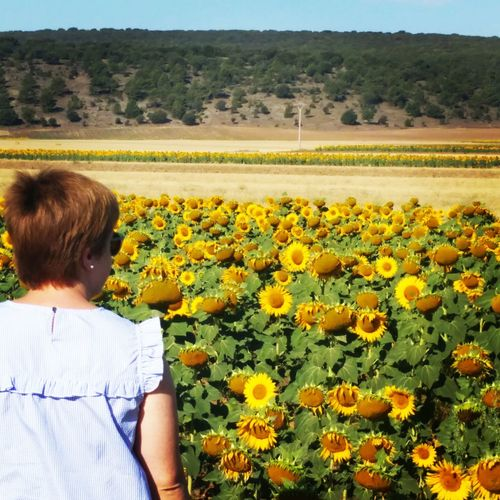 Flower Agriculture Field Rear View Sunflower Rural Scene Beauty In Nature EyeEm Best Shots Popular Photos EyeEm Gallery Taking Photos First Eyeem Photo Relaxing
