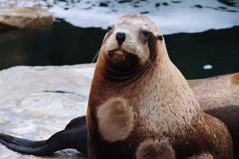 Seals relaxing at shore
