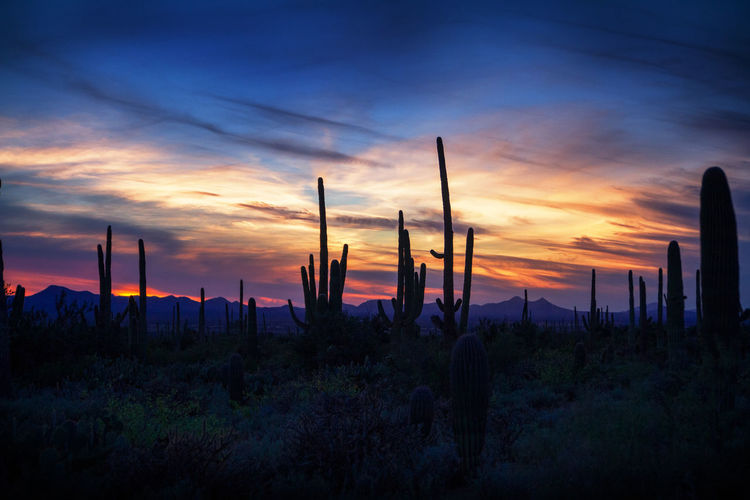 Saguaro Sunset Eric Barnes Photography Learn & Shoot: After Dark Landscapes With WhiteWall The Great Outdoors With Adobe