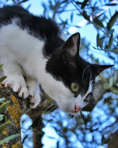 Pets Domestic Cat Domestic Animals Animal Feline Mammal Cute Animal Themes One Animal Ear Living Organism Day Outdoors Close-up Pet Portraits Backgrounds Tree