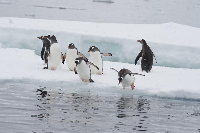 View of birds on frozen water