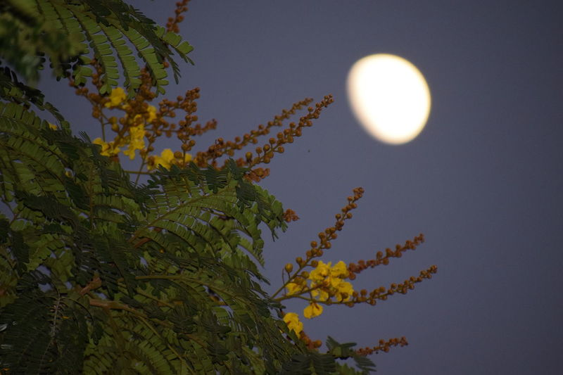Moon Beauty In Nature Scenics Tree Sky Half Moon Low Angle View Outdoors Astronomy Nature Night Beauty In Nature Green Color Tree Branch Moonandtree