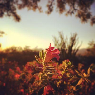 Arizona Texasrangers Catalina Mountains  SundayFunday Trees Views Desert
