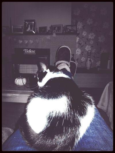 Cat♡ Fat Ass