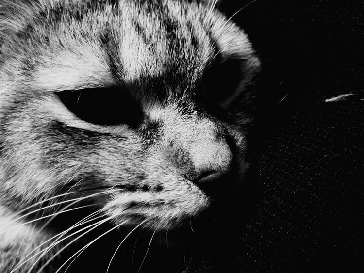 EyeEm Selects Pets Portrait Close-up One Animal Mammal Nose Domestic Animals