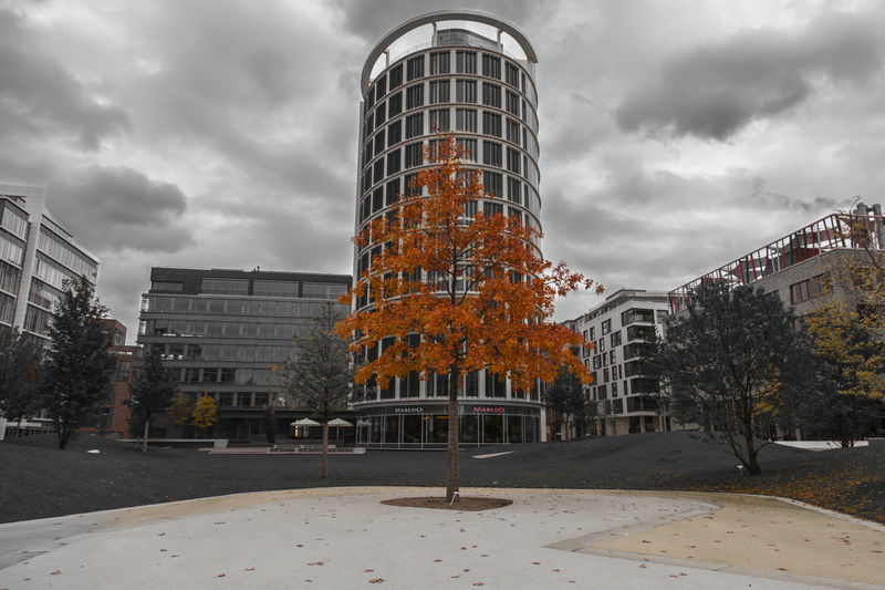 Architecture Autumn Building Exterior Buildings Built Structure City City Cityscape Cloud - Sky Color Day Leafs Modern Nature No People Outdoors Sky Skyscraper Tree Tree Urban