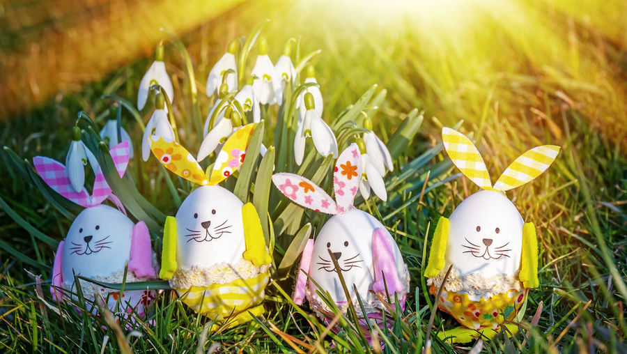 Four easter eggs with bunny ears in the sun Easter Plant Easter Egg Egg Celebration Holiday Flower Springtime Bunny  Bunny Ears  Funny Happiness Easter Eggs Easter Bunny Card Sun Family Children Greeting Card  Nature Garden Gift Cheerful Fun Vitality