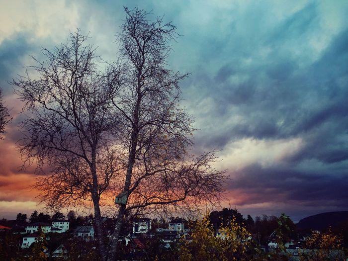 Trees TreePorn