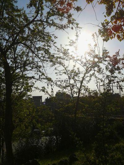 Let her blossom 🌺🌳🌺 Natureinthecity Greenlicious Treeshunter Yeah Springtime! Thessaloniki Greece OpenEdit Urbangardenersrepublic Nearby Lifegasm Nature Textures