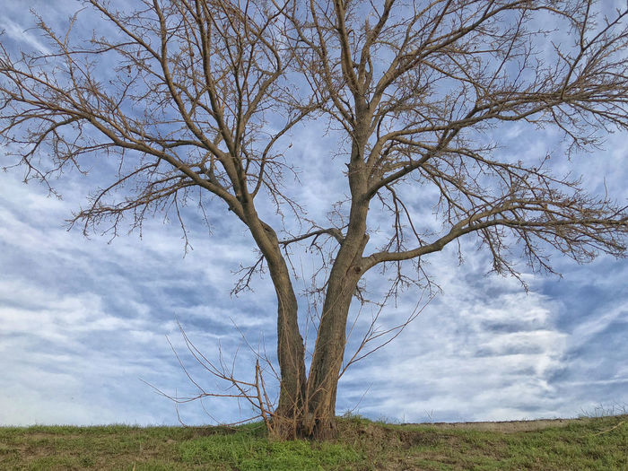 Split Bare Tree