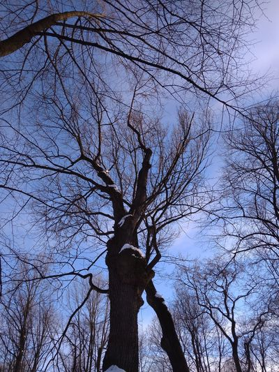 Life of trees EyeEmNewHere Trees And Sky Treesnature Nature_collection Trees Tree Branch Bare Tree Sky