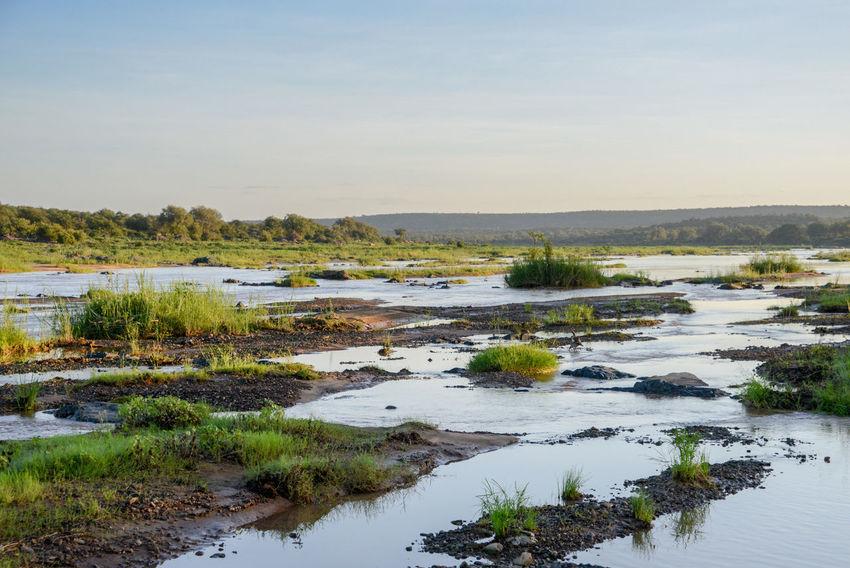 Safari in Kruger National Park, South Africa. Kruger Park National Park South Africa Wildlife & Nature Africa Beauty In Nature Kruger Krugernationalpark Krugerpark Landscape Nature No People Outdoors Safari Scenics Tranquil Scene Tranquility Water