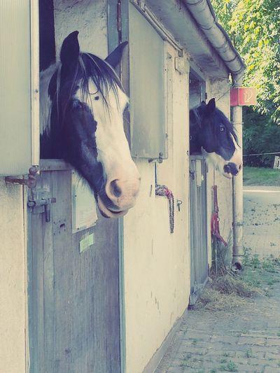 Darmstadt Horses Reitverein