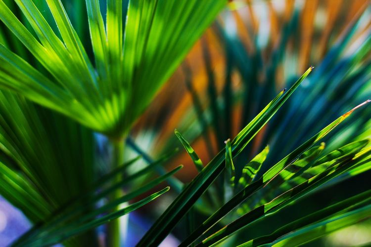 Close-up of palm tree growing in field