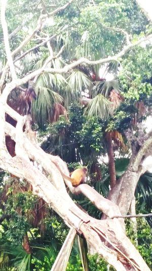 More monkeys. Animals Zoo Animals  Zoo! Zoo Day Monkey ZOO-PHOTO Zoo