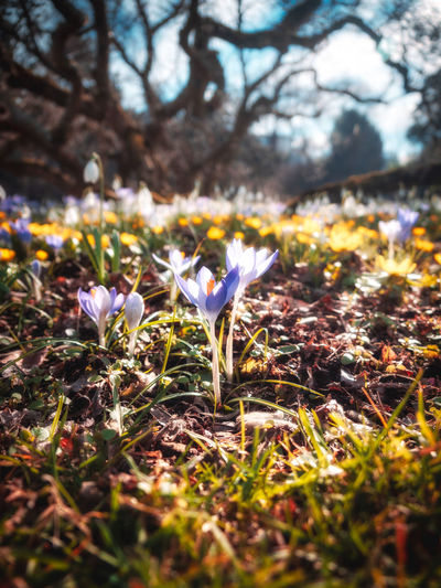 Plant Flower Land Flowering Plant Beauty In Nature Selective Focus Nature Freshness Growth Vulnerability  Field Fragility No People Day Close-up Tree Petal Sunlight Leaf Outdoors Iris Crocus Flower Head Purple