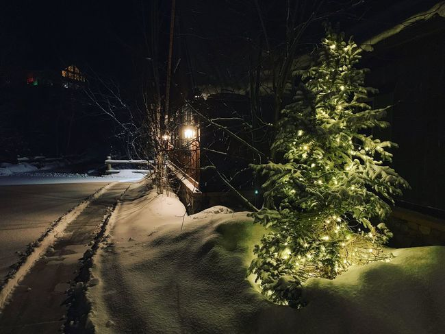 fresh snow. and it's so cold you can't feel it. my favorite nights. 🏔❄️✨ Iphonexs Winter Conditions Wasatch Back Utah Wasatch County Night Illuminated Tree Plant Nature No People City