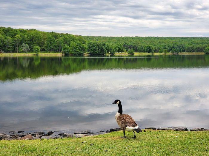 Birds on lake against sky