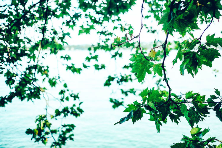 Close-up of leaves hanging over lake