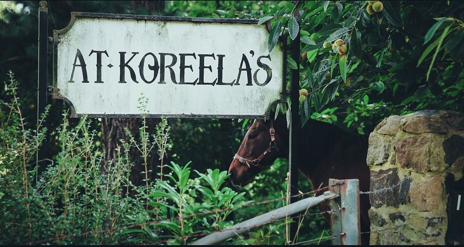 Cottage and horse Horse Portrait Horse Cottage Australia Landscape Cinematic Green Animal