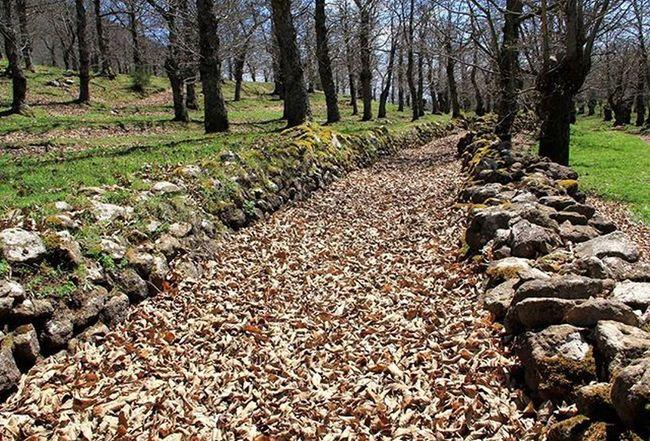 Trekking Landscapecaptures Natura Roccamonfina