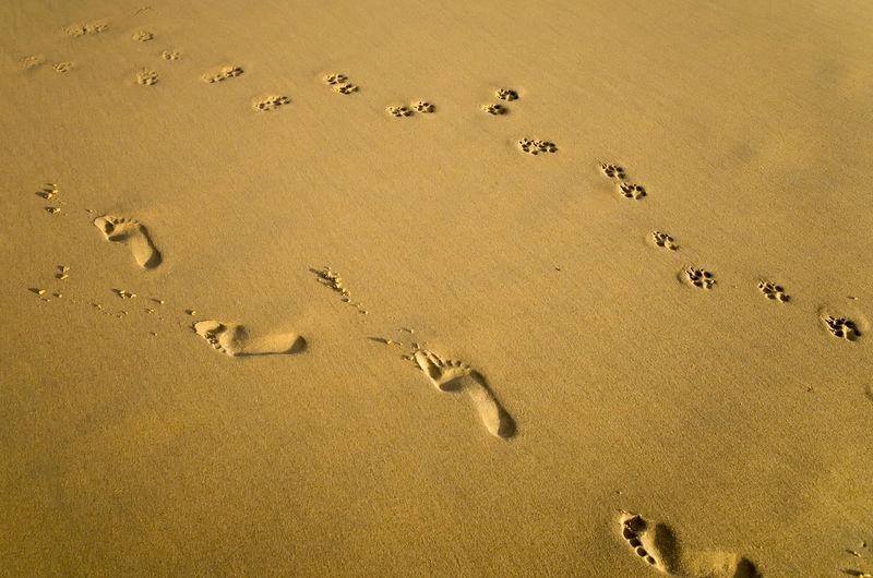 High angle view of footprints on sandy beach