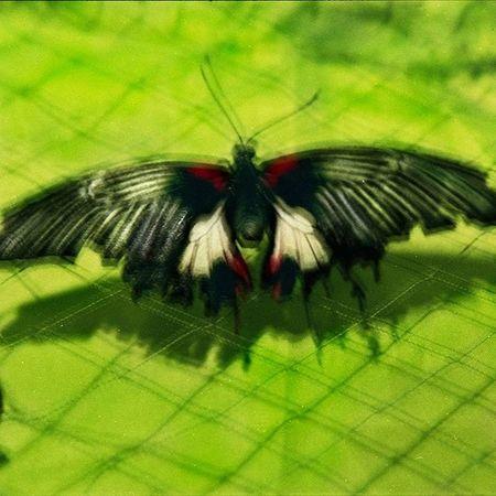 цветныекартинки Film Filmfoto Art Photoart Design Decor Butterfly 35mm Analogphotography Analog фото 45*45см яркие акценты интерьера