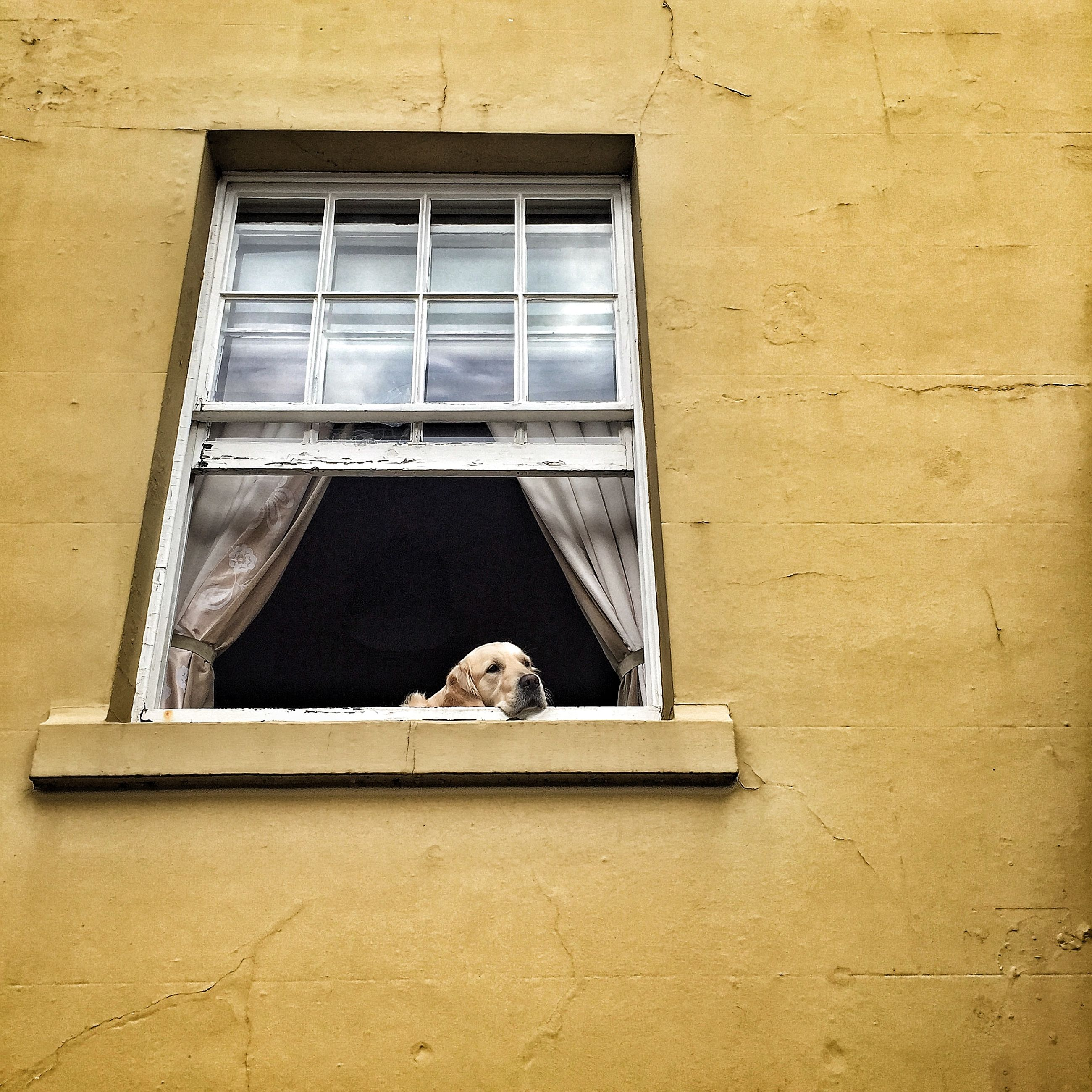 animal themes, window, one animal, building exterior, architecture, pets, built structure, domestic animals, mammal, domestic cat, cat, house, low angle view, residential structure, feline, residential building, window sill, wall - building feature, no people, glass - material