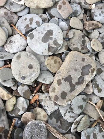 Raindrops keep falling No People Outdoors Pebble Close-up Nature EyeEmNewHere Beauty In Nature Nature Iamcanadian Weather Rain