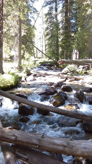 Nature Forest No People Tranquil Scene Scenics Beauty In Nature Water Day Outdoors Nature Tree Idaho Landscape River River Bed Logs In Water Logs In The Stream Logs With Growth Rapids High Water Level