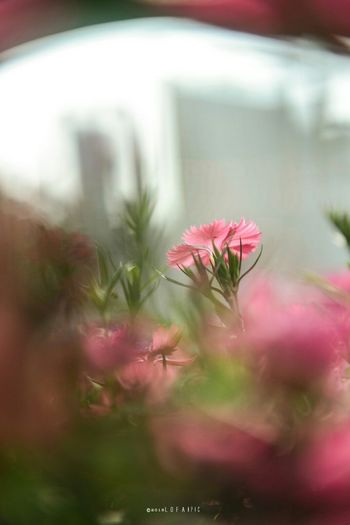 Flower Nature Growth Plant Close-up Outdoors No People Fragility Day Flower Head Beauty In Nature Freshness