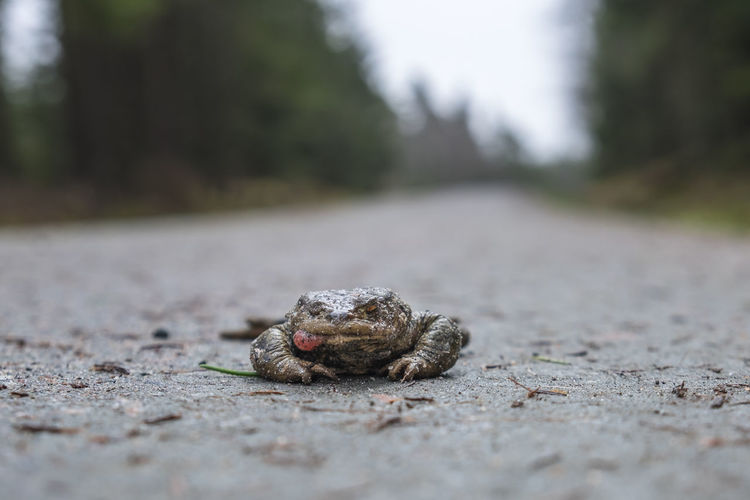 Close-up of crab on road