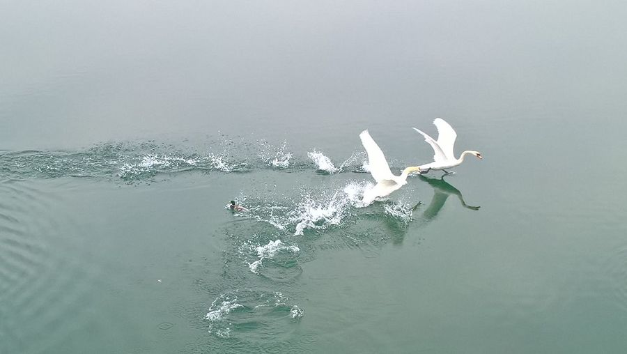 High angle view of birds flying over sea