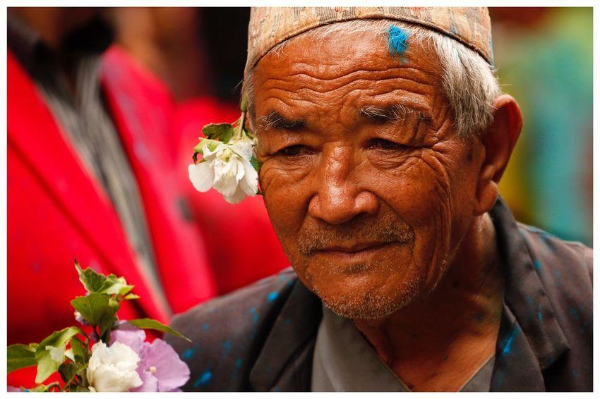 Vieil homme Nepal Ethnique Regard Vieillesse Minorité Kathmandou Nepal Flower Portrait Headshot One Person Flowering Plant Close-up Senior Adult Real People Adult Men Looking Away Front View Flower Head Human Face