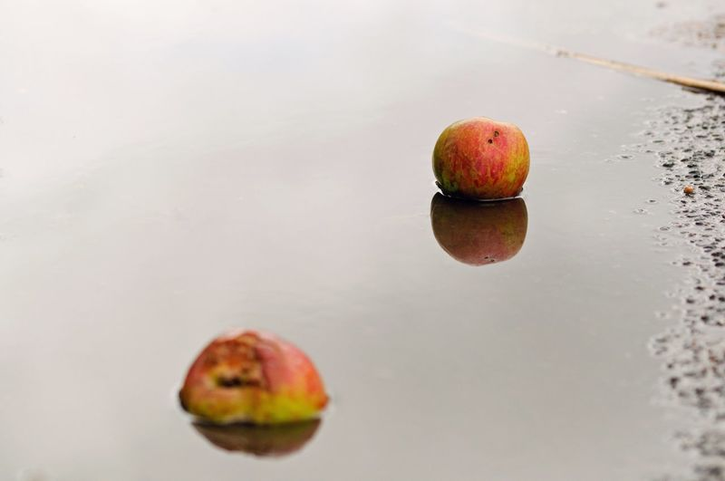 Fruit Autumn