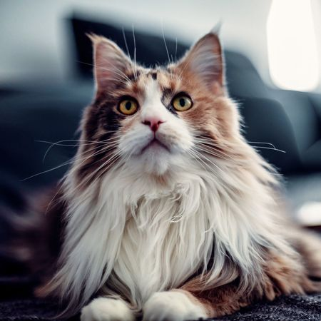 Domestic Pets Animal Animal Themes Domestic Animals Domestic Cat Mammal Cat One Animal Feline Indoors  Portrait Close-up Whisker
