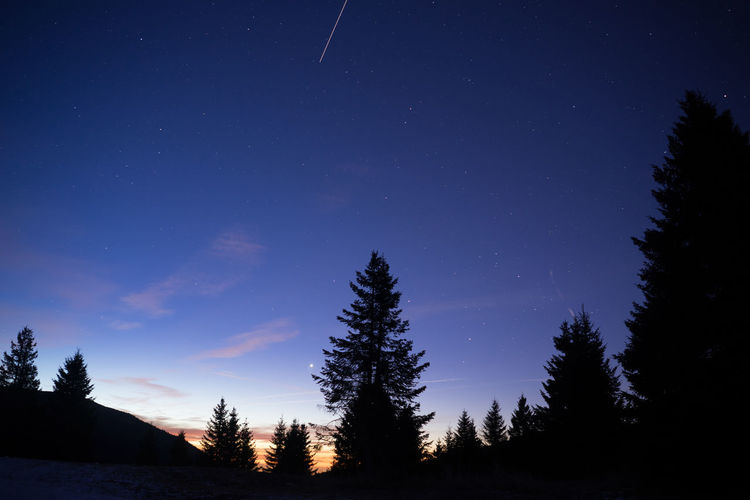 Low angle view of silhouette trees against star field at dusk
