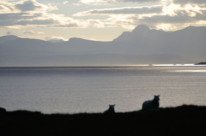 Sheep return to graze in the early morning with the west coast of Scotland in the background. Coast Dawn Landscape Morning Mountain Mountain Range No People Non-urban Scene Remote Scotland Sheep Sky Skye Water