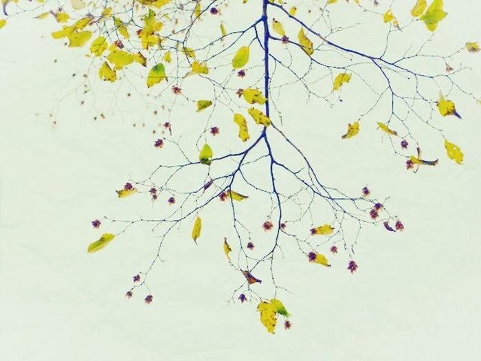 Low angle view of tree branches