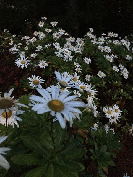 Fall Blooms Cape Cod Tadaa Community