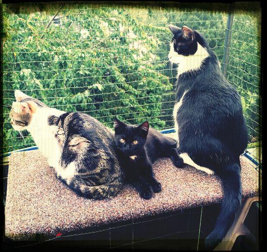 Cat♡ Lovecats Watching Miezekatze