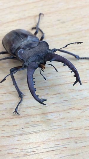 Вдруг в окно залетел жук. Nature Macro