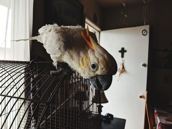 The bird was friendly for a first time encounter. New Friends Pets EyeEm Selects Cage Birdcage Parrot