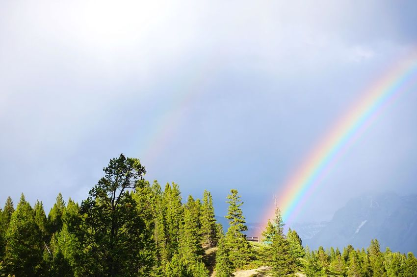 Banff  Alberta Canada Road Tripping Abventure Exploring Travel Mountains After Rain Rainbow Tree Sky Nature