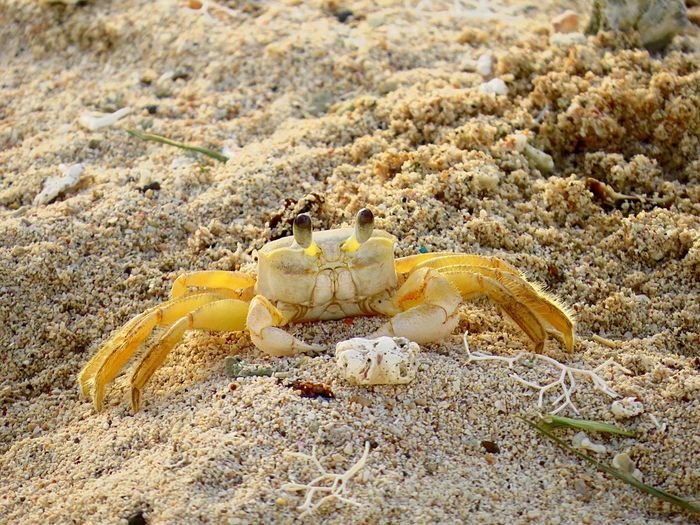 Hello! Crab Close-up Cozumel Mexico Beach Photography Canon Canonphotography Photooftheday Animal Nature