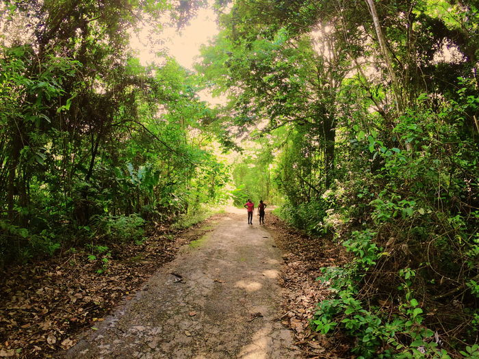 Nature Nature_collection Naturelovers Forest Landscape Landscapephotography Chaguaramas Scenic Adventure Tree Walking Standing Full Length Green Color Lush Foliage Lush - Description Tree Canopy  Trail Growing Pathway Countryside Dirt Track Woods Greenery Green The Traveler - 2018 EyeEm Awards