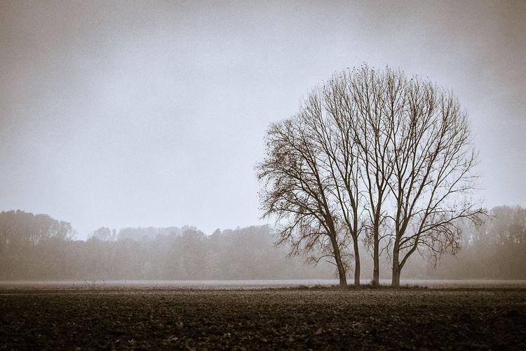 Single tree against clear sky