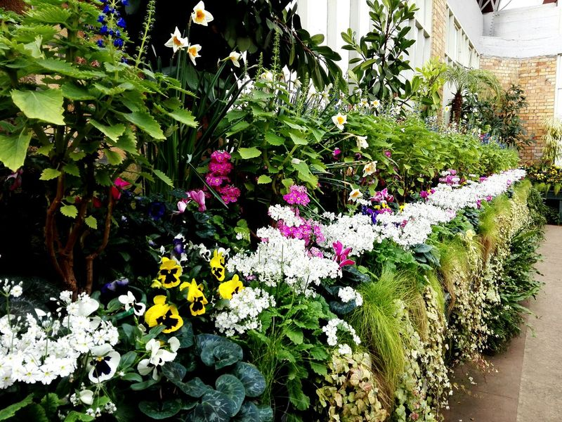 Row of Flowers (2/2). Growth Nature Flower Plant Day Beauty In Nature Green Color No People Fragility Freshness Greenhouse Plant Nursery Indoors  Beauty In Nature