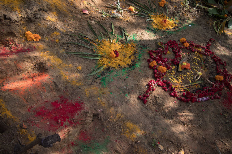 High angle view of multi colored flowers on water